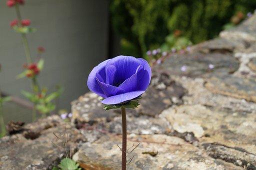 Flower, Purple Flower, Pansy, Purple, Floral, Bloom