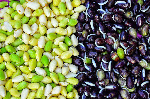 Maize, Mixed, Food, Beautiful, Natural, Black, White