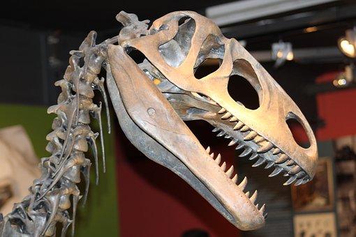 Bone, Dinosaur, Skeleton, Fossils, Museum