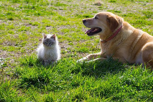 Dog, Cat, Kitten, Cute, Farm, Friendship