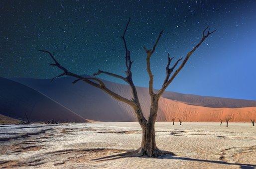 Namibia, Deadvlei, Panorama, Acacia, Landscape, Africa