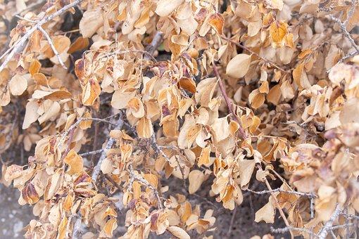 Autumn, Dry Leaves, Tree, Beige, Foliage, Dry, Nature