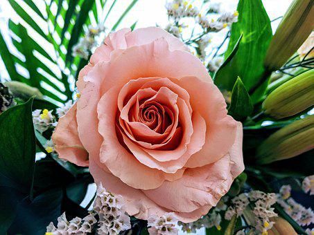 Dusty Rose, Rose, Flowers, Pink Rose, Bouquet, Love