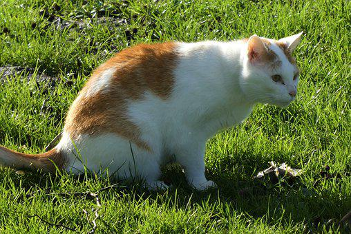 Cats, Coat, Hunter, Eyes, Mammal, Face, Cat, Pet, Hairy