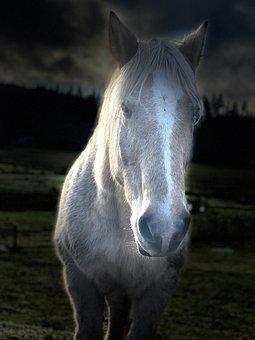 Horse, Draft Horse, Equine, Animal, Horses, Mammal