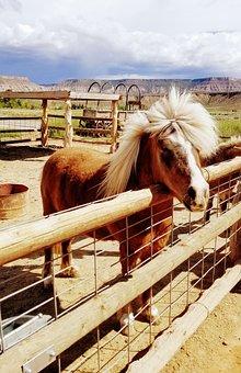 Pony, Mini-horse, Horse, Corral, West, Utah, Farm, Mane