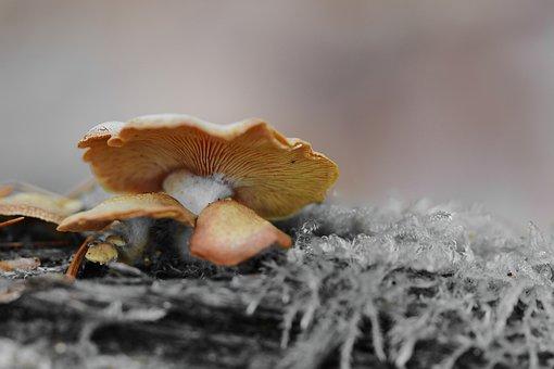 Nature, Forest, Mushroom, Tree Stump, Winter, Cold