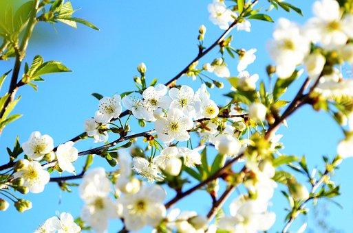 Nature, Spring, Flower, Green, Garden