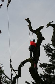Tree Climbers, Arborist, Cases, Tree, Nature, Wood