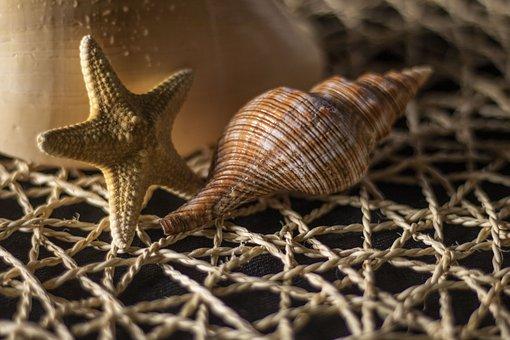 Beach, Sand, Shells, Starfish, Summer, Nature, Relax