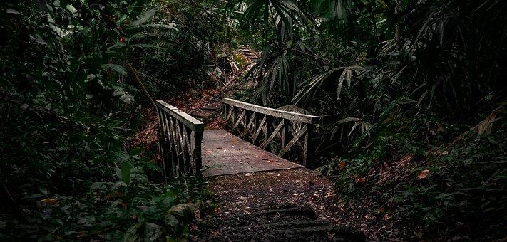 Jungle, Bridge, Path, Nature, Forest, Trees, River