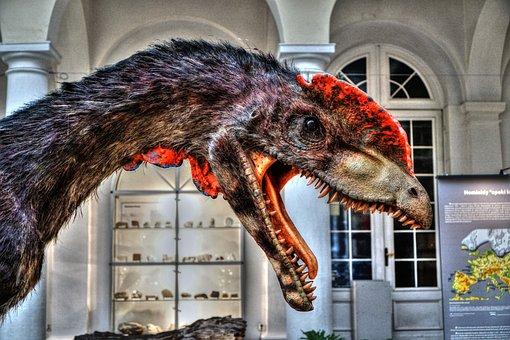 The Museum, Dinosaur, Geology