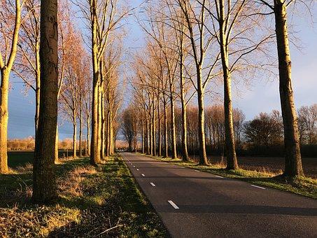 Sunlight, Fiercely, Contrast, Trees