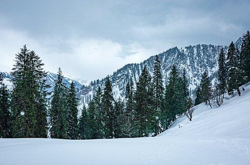 Snow, Snowfall, Winter, Himalayas, Trek, Trekking