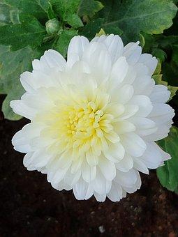 Cute, Beautiful, Nature, Flower, White Flower, White