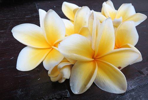 Frangipani, Flower, Nature, Tree, Yellow, White