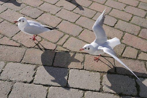 Animal World, Gulls, Nature, Wing, Shadow, Water Bird