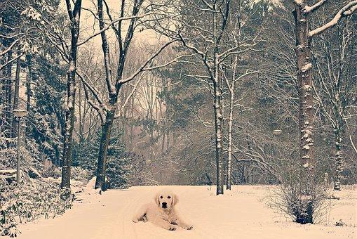 Dog, Animal Lane, Park, Tree, Snow, Winter Scene