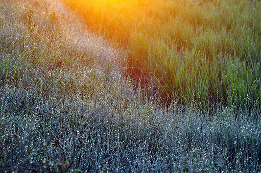 Natural, Landscape, Plant, Yamada's Rice Fields, Grass
