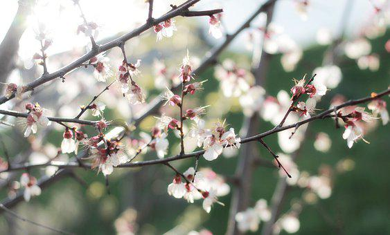 Spring, Blossom, Sunshine, The Lights Of A Sun, Branch