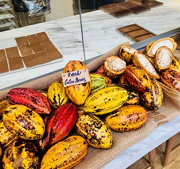 Cocoas, Plants, Cacao, Chocolate, Fruit, Nature