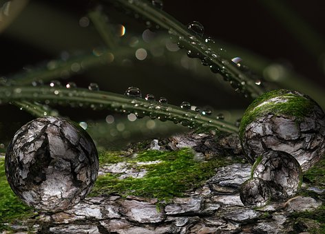 Balls, Birch, Green, Bark, Drop Of Water, Moss, Halme