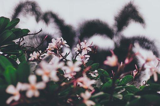 Flowers, Wallpaper, Blossom, Botanical, Wildflower