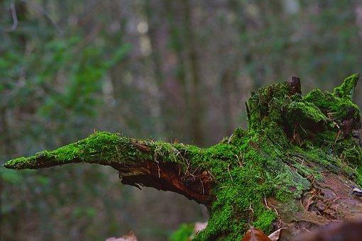 Nature, Forest, Root, Moss, Secret, Green, Wood, Winter