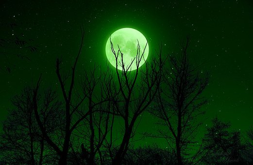 Full Moon, Green, Night, Star, Sky, Trees, Silhouette