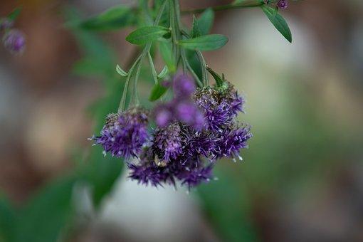 Wild Flower, Flower, Plant, Bloom, Field, Fall, Happy