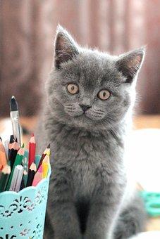 Little, Cat, Kitten, Funny, Portrait