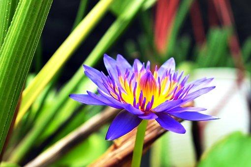 Flower, Bright, Oriental, Season, Romance, Love