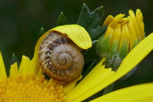 Snail, Garden, Shell, Animal, Mollusk
