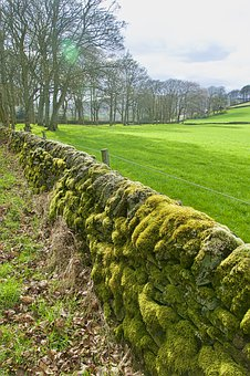 Wall, Moss, Rock, Old, Overgrown, Landscape, Stone