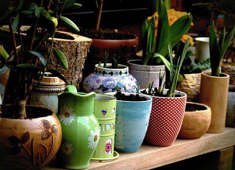 Plant, Planting Pots, Spring, Flower Pots, Gartendeko