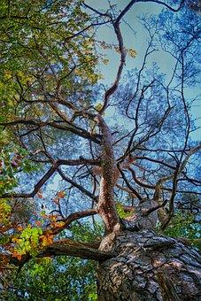 Tree, Skeleton, Uplight, Fairy, Fantasy, Nature, Trees