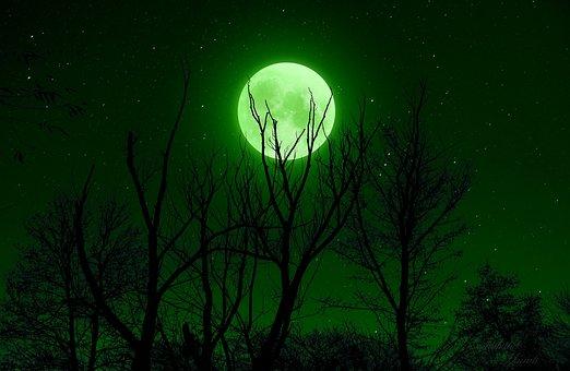 Full Moon, Green, Night, Star, Sky, Trees, Silhouette
