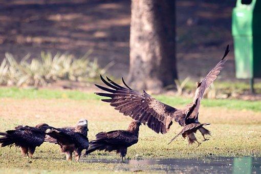 Bird, Nature, Nikon, Animal, Swan, Owl, Spring