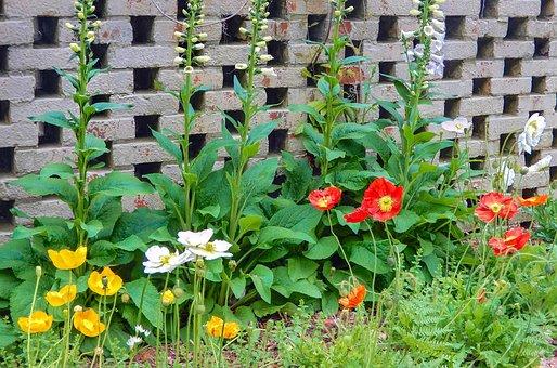 Poppies, Yellow, White, Orange
