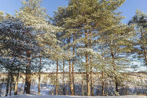 Winter, Sestroretsk, February, Stroll, Frost, Beauty