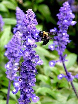 Yellow Jacket, Bumble Bee, Purple Wildflowers