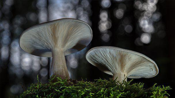 Mushrooms, Autumn, Forest, Moss, Nature, Forest Floor