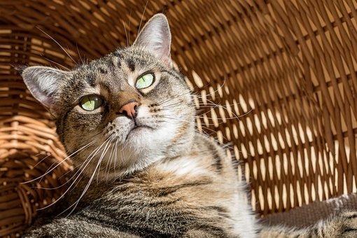 Cat, Sun, Portrait, Pet, Relax, Light
