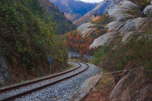 Rail, Curve, Reed, Maple, Railway, Away