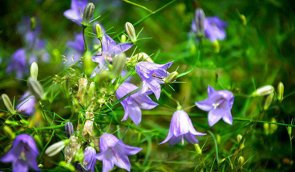 Flowers, Tiny, Nature, Plant, Small, Bloom, Garden