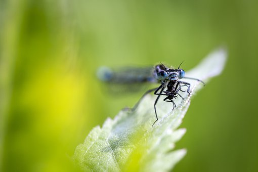 Insect, Nature, Animal, Close-up, Macro, Fly, Pest