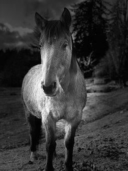 Quarter Horse, Horse, Dun, Horses, Animal, Ranch