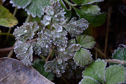 Frost, Ice, Winter, Frozen, Nature, Icy, January