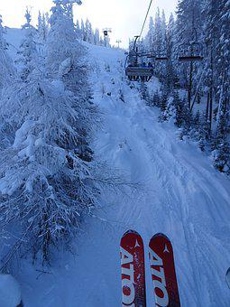 Snow, Skiing, Lift, Forest, Winter