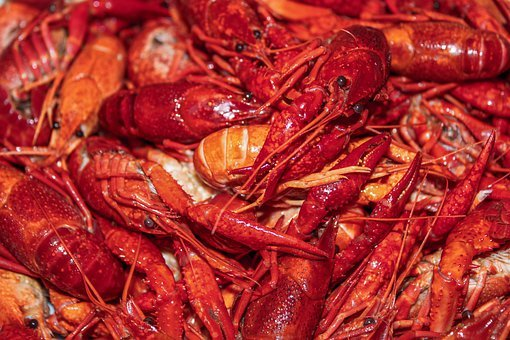 Lobster, Shift, Orange, Red, Eyes, Body